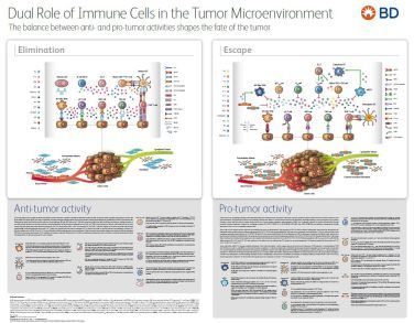 Immune Cells in the tumor Microenvironment
