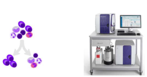 Fluorescence assisted cell-sorting in a oncohematology laboratory