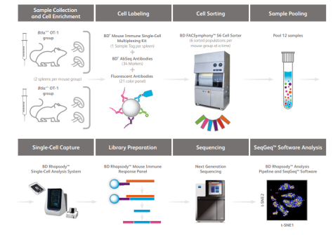 Leveraging the power of high-parameter cell sorting and single-cell multi-omics to profile intra-tumoral immune cells in a model of B cell lymphoma